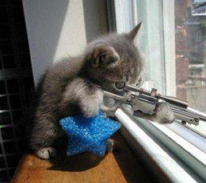 2007_juin_chat-sniper